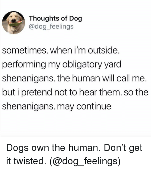 obligatory: Thoughts of Dog  @dog_feelings  sometimes. when i'm outside.  performing my obligatory yard  shenanigans. the human will call me.  but i pretend not to hear them. so the  shenanigans. may continue Dogs own the human. Don't get it twisted. (@dog_feelings)