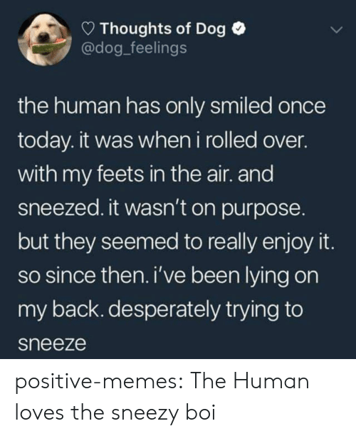 Memes, Tumblr, and Blog: Thoughts of Dog  @dog_feelings  the human has only smiled once  today. it was when i rolled over.  with my feets in the air. and  sneezed. it wasn't on purpose.  but they seemed to really enjoy it  so since then. i've been lying on  my back. desperately trying to  sneeze positive-memes:  The Human loves the sneezy boi