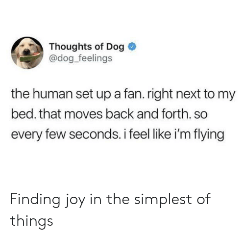 im flying: Thoughts of Dog  @dog_feelings  the human set up a fan. right next to my  bed. that moves back and forth. so  every few seconds. i feel like i'm flying Finding joy in the simplest of things
