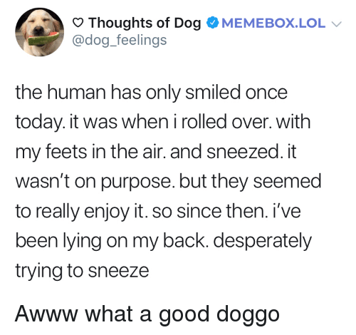 Lol, Good, and Today: Thoughts of Dog OMEMEBOX.LOL  @dog_feelings  the human has only smiled once  today. it was when irolled over. with  my feets in the air. and sneezed. it  wasn't on purpose. but they seemed  to really enjoy it. so since then. i've  been lying on my back. desperately  trying to sneeze Awww what a good doggo