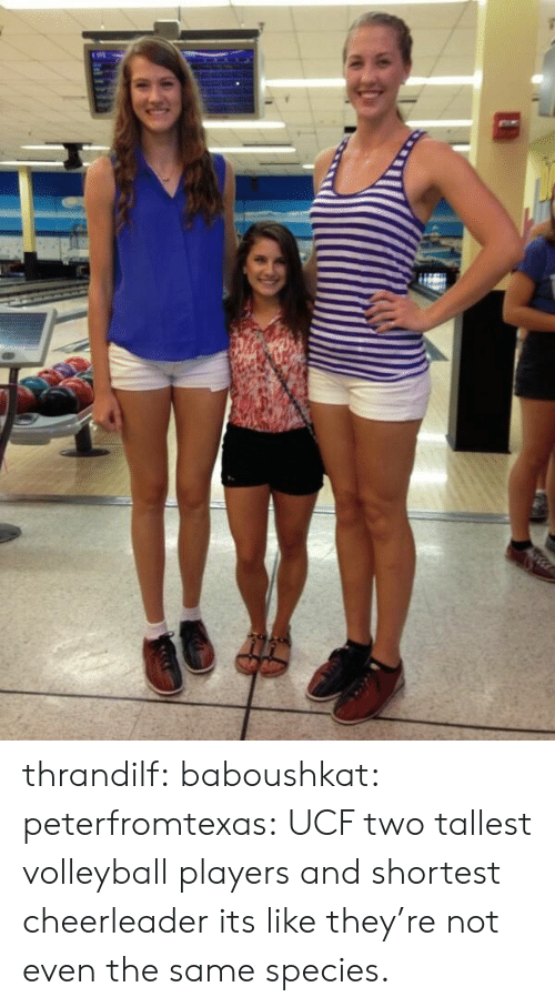 fellowship: thrandilf:  baboushkat:  peterfromtexas:  UCF two tallest volleyball players and shortest cheerleader  its like they're not even the same species.
