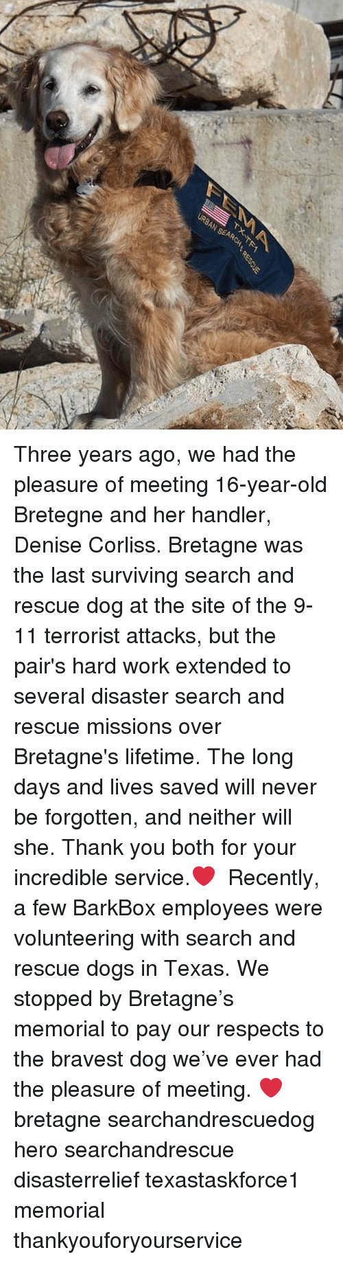 9/11, Dogs, and Memes: Three years ago, we had the pleasure of meeting 16-year-old Bretegne and her handler, Denise Corliss. Bretagne was the last surviving search and rescue dog at the site of the 9-11 terrorist attacks, but the pair's hard work extended to several disaster search and rescue missions over Bretagne's lifetime. The long days and lives saved will never be forgotten, and neither will she. Thank you both for your incredible service.❤️ ⠀ Recently, a few BarkBox employees were volunteering with search and rescue dogs in Texas. We stopped by Bretagne's memorial to pay our respects to the bravest dog we've ever had the pleasure of meeting. ❤️ ⠀ bretagne searchandrescuedog hero searchandrescue disasterrelief texastaskforce1 memorial thankyouforyourservice