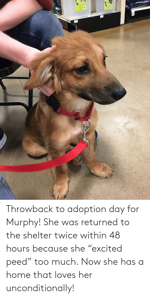"peed: Throwback to adoption day for Murphy! She was returned to the shelter twice within 48 hours because she ""excited peed"" too much. Now she has a home that loves her unconditionally!"