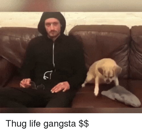 Gangsta, Life, and Thug: Thug life gangsta $$