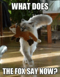 does the fox say