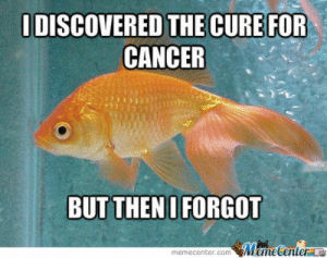 Forgetful Goldfish