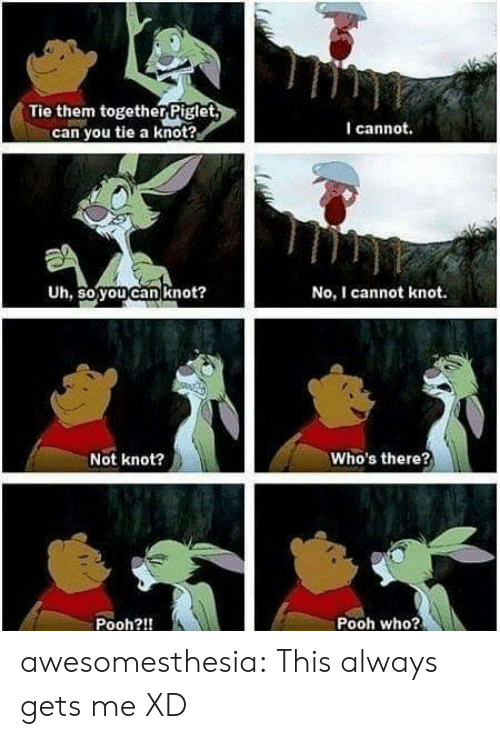 Tumblr, Blog, and Com: Tie them togetherPiglet  can you tie a knot?  I cannot.  Uh, so you can knot?  No, I cannot knot.  Who's there?  Not knot?  Pooh who?  Pooh?!! awesomesthesia:  This always gets me XD