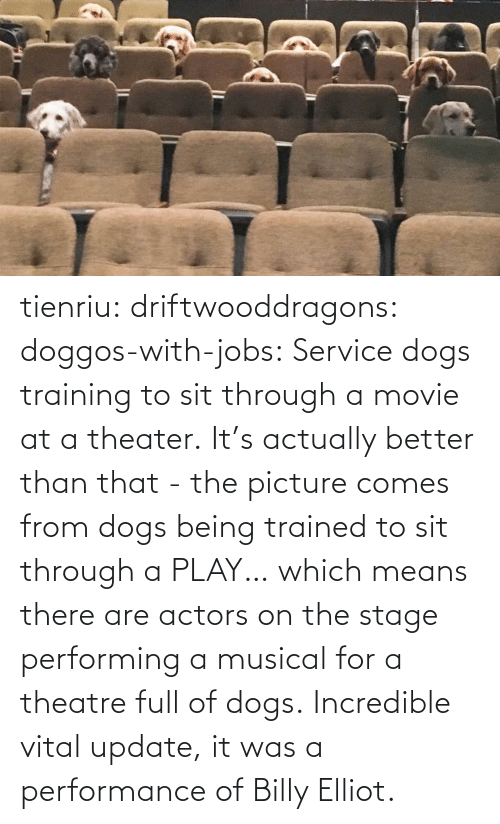 Comes: tienriu: driftwooddragons:  doggos-with-jobs: Service dogs training to sit through a movie at a theater. It's actually better than that - the picture comes from dogs being trained to sit through a PLAY… which means there are actors on the stage performing a musical for a theatre full of dogs.   Incredible vital update,  it was a performance of Billy Elliot.