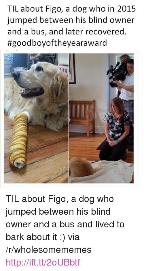 """Good, Http, and Jumped: TIL about Figo, a dog who in 2015  jumped between his blind owner  and a bus, and later recovered.  #good boyoftheyeara ward <p>TIL about Figo, a dog who jumped between his blind owner and a bus and lived to bark about it :) via /r/wholesomememes <a href=""""http://ift.tt/2oUBbtf"""">http://ift.tt/2oUBbtf</a></p>"""