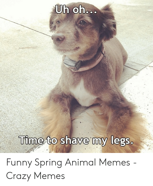 Funny Spring Memes: Time-to shave my legS.