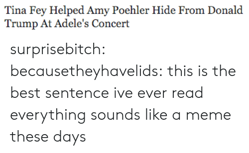 Amy Poehler, Donald Trump, and Meme: Tina Fey Helped Amy Poehler Hide From Donald  Trump At Adele's Concert surprisebitch:  becausetheyhavelids:  this is the best sentence ive ever read  everything sounds like a meme these days