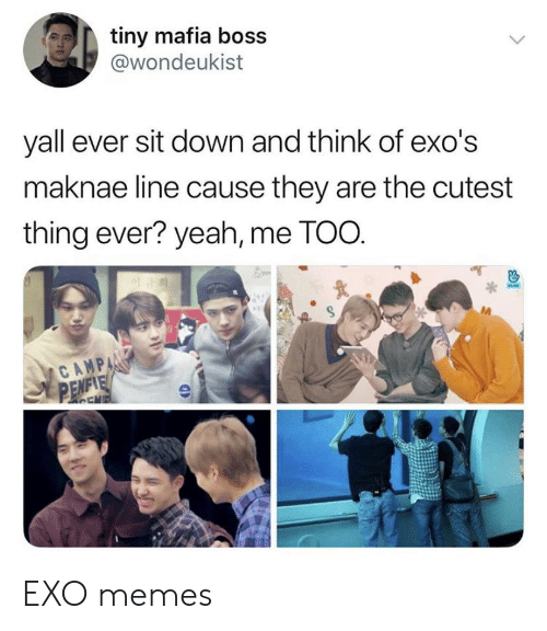 Memes, Yeah, and Exo: tiny mafia boss  @wondeukist  yall ever sit down and think of exo's  maknae line cause they are the cutest  thing ever? yeah, me TOO.  CAMP  APC EXO memes