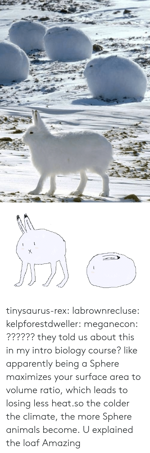 Ratios: tinysaurus-rex:   labrownrecluse:  kelpforestdweller:  meganecon:  ??????  they told us about this in my intro biology course? like apparently being a Sphere maximizes your surface area to volume ratio, which leads to losing less heat.so the colder the climate, the more Sphere animals become.  U explained the loaf   Amazing