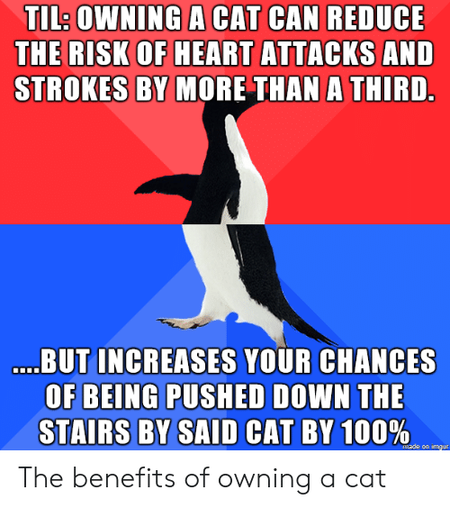 strokes: TL: OWNING A CAT CAN REDUCE  THE RISK OF HEART ATTACKS AND  STROKES BY MORE THAN A THIRD  BUT INCREASES YOUR CHANCES  OF BEING PUSHED DOWN THE  STAIRS BY SAID CAT BY 100  %,  made on imgur The benefits of owning a cat