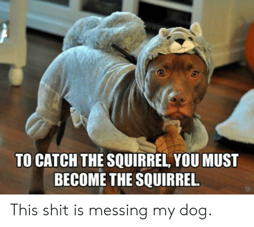 Squirrel: TO CATCH THE SQUIRREL, YOU MUST  BECOME THE SQUIRREL. This shit is messing my dog.