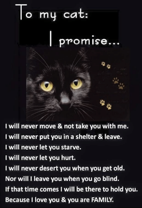 Family, Love, and Memes: To my cat  promise...  I will never move & not take you with me.  I will never put you in a shelter & leave.  I will never let you starve.  I will never let you hurt.  I will never desert you when you get old.  Nor will I leave you when you go blind.  If that time comes I will be there to hold you.  Because I love you & you are FAMILY.