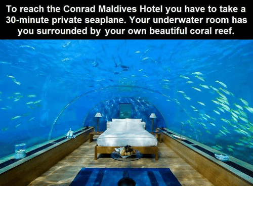 Dank, Hotel, and 🤖: To reach the Conrad Maldives Hotel you have to take a  30-minute private seaplane. Your underwater room has  you surrounded by your own beautiful coral reef.
