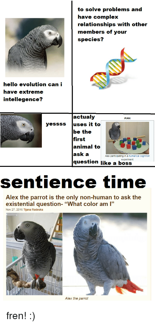 """Complex, Hello, and Relationships: to solve problems and  have complex  relationships with other  members of your  species?  hello evolution can i  have extreme  intellegence?  actualy  Alex  yessss uses it to  be the  first  animal to  ask a  question like a boss  Alex participating in a numerical cognition  experiment  sentience time  Alex the parrot is the only non-human to ask the  existential question- """"What color am """"  Nov 27, 2016 Tijana Radeska  Alex the parrot fren! :)"""