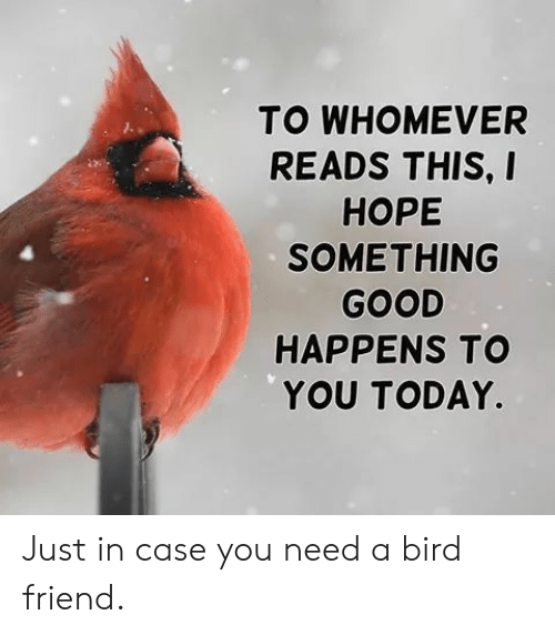 Reads: TO WHOMEVER  READS THIS, I  НОРЕ  SOMETHING  GOOD  HAPPENS TO  YOU TODAY. Just in case you need a bird friend.
