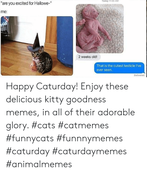 """Cats, Caturday, and Memes: Today 11:55 AM  """"are you excited for Hallowe-""""  me:  2 weeks old!  That is the cutest testicle I've  ever seen.  Delivered Happy Caturday! Enjoy these delicious kitty goodness memes, in all of their adorable glory. #cats #catmemes #funnycats #funnnymemes #caturday #caturdaymemes #animalmemes"""
