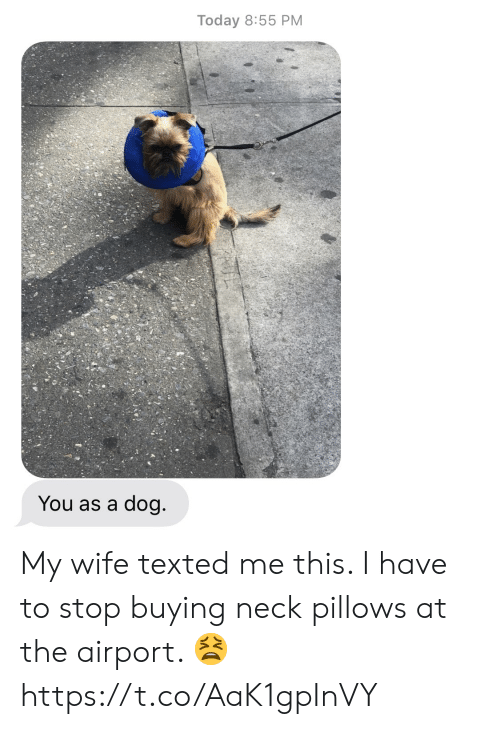 texted: Today 8:55 PM  You as a dog My wife texted me this.  I have to stop buying neck pillows at the airport. 😫 https://t.co/AaK1gpInVY