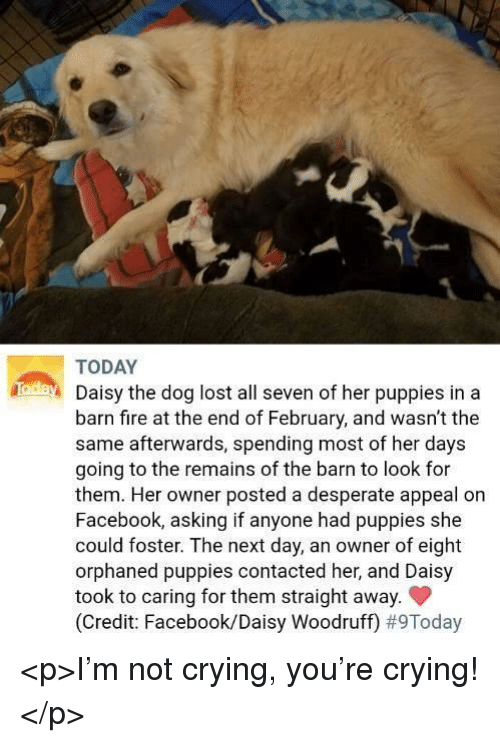 Crying, Desperate, and Facebook: TODAY  Daisy the dog lost all seven of her puppies in a  barn fire at the end of February, and wasn't the  same afterwards, spending most of her days  going to the remains of the barn to look for  them. Her owner posted a desperate appeal on  Facebook, asking if anyone had puppies she  could foster. The next day, an owner of eight  orphaned puppies contacted her, and Daisy  took to caring for them straight away.  (Credit: Facebook/Daisy Woodruff) <p>I'm not crying, you're crying!</p>