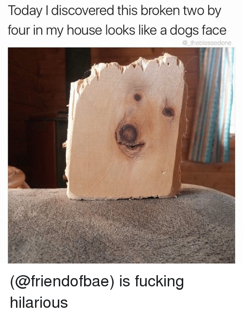 Funny, Meme, and My House: Today I discovered this broken two by  four in my house looks like a dogs face  theblessedone (@friendofbae) is fucking hilarious