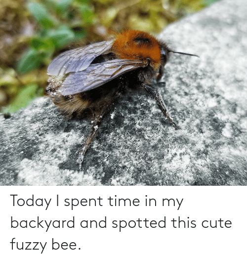 cute: Today I spent time in my backyard and spotted this cute fuzzy bee.