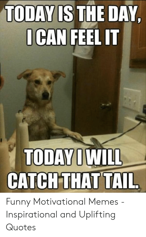 Motivational Memes: TODAY IS THE DAY  I CAN FEEL IT  CATCHTHAT TAIL Funny Motivational Memes - Inspirational and Uplifting Quotes