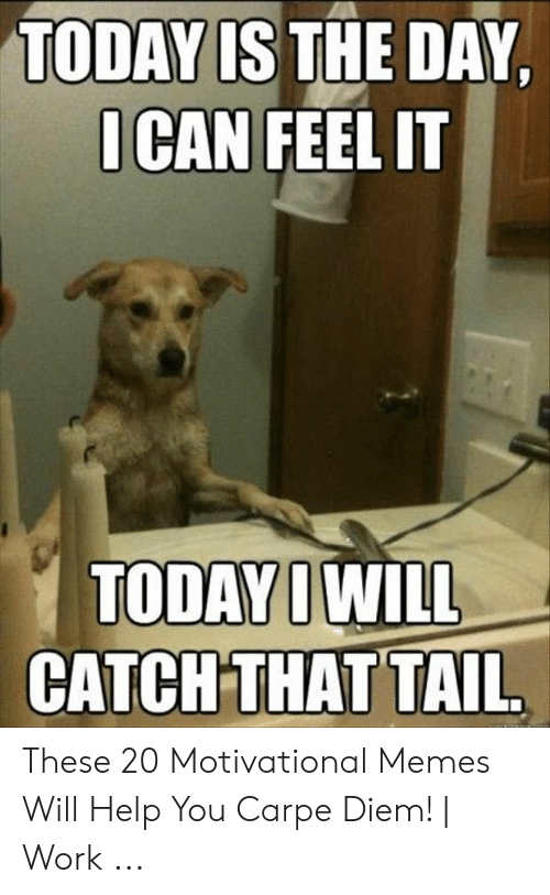 Motivational Memes: TODAY IS THE DAY,  ICAN FEEL IT  TODAY IWILL  CATCH THAT TAIL These 20 Motivational Memes Will Help You Carpe Diem! | Work ...