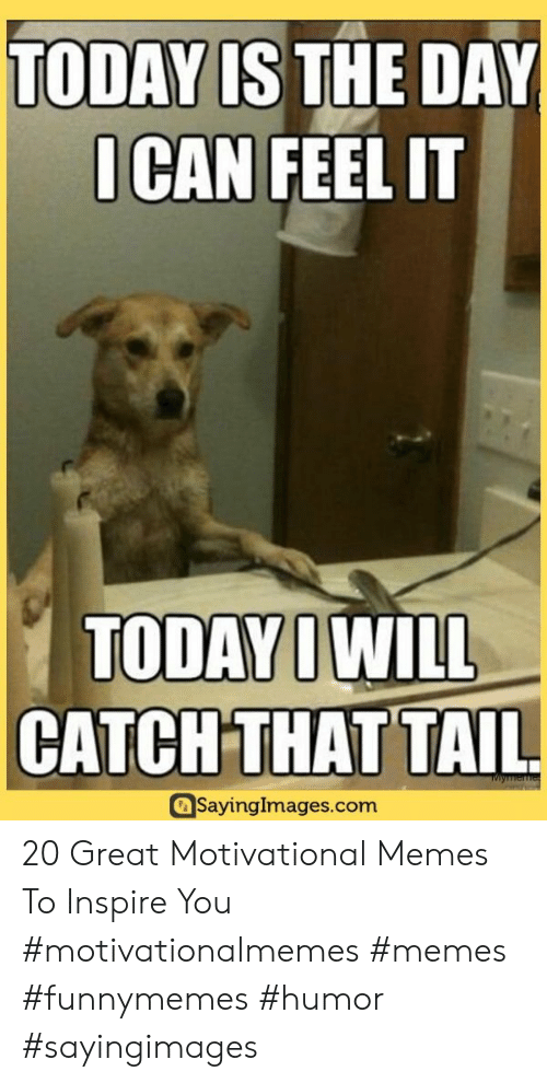 Motivational Memes: TODAY IS THE DAY  OCAN FEEL IT  TODAY IWILL  CATCH THAT TAIL  Miymemes  Sayinglmages.com 20 Great Motivational Memes To Inspire You #motivationalmemes #memes #funnymemes #humor #sayingimages