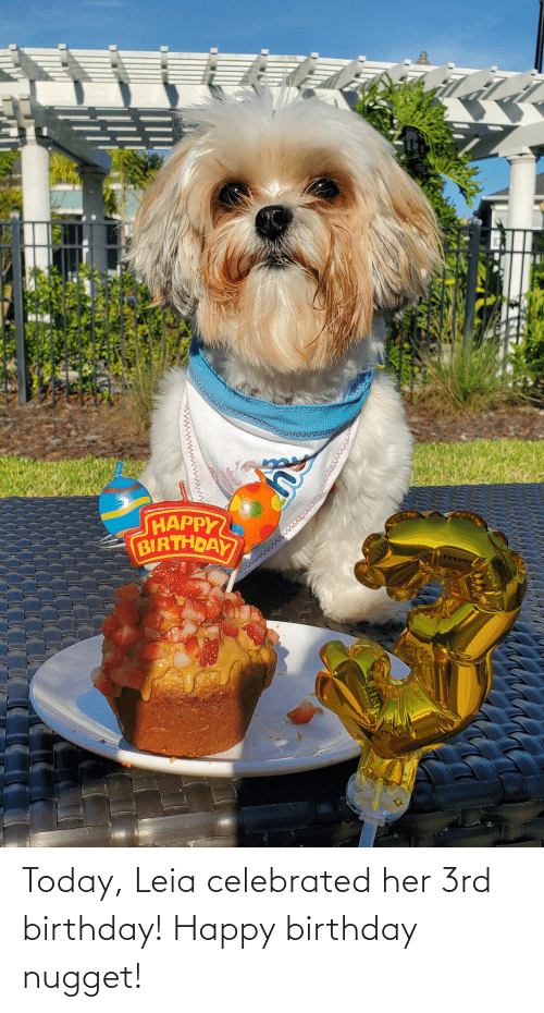Celebrated: Today, Leia celebrated her 3rd birthday! Happy birthday nugget!