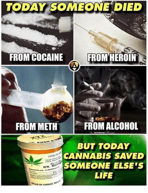 Heroin, Life, and Memes: TODAY SOMEONE DIED  FROM COCAINE  FROM HEROIN  FROM METHFR  FROM ALCOHOL  BUT TODAY  CANNABIS SAVED  SOMEONE ELSE'S  LIFE  313)11  OLAIA  Ro  DR  RGOFCHOICE