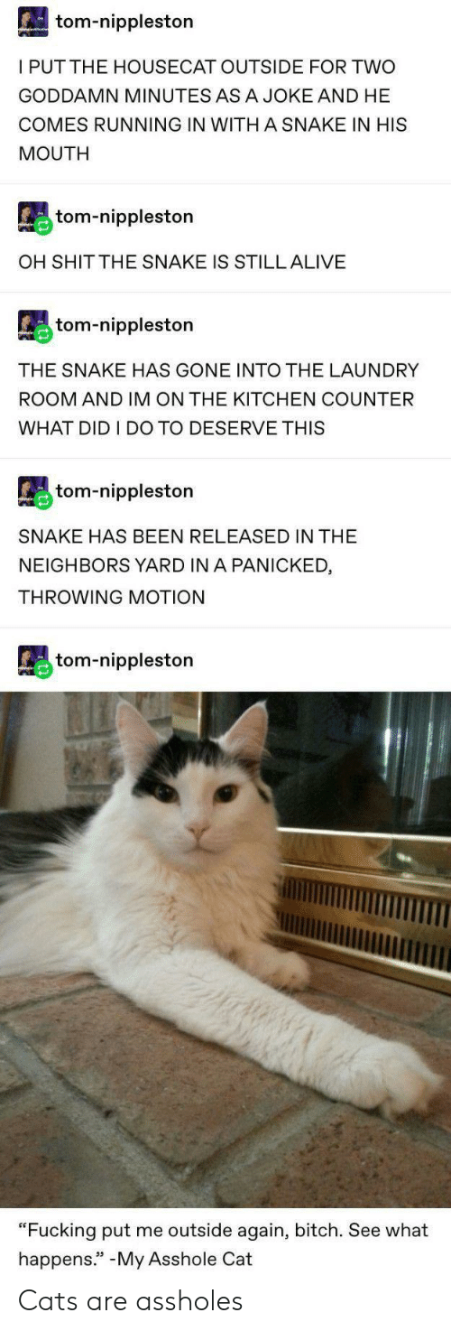 "Cats Are: tom-nippleston  I PUTTHE HOUSECAT OUTSIDE FOR TWO  GODDAMN MINUTES ASA JOKE AND HE  COMES RUNNING IN WITH A SNAKE IN HIS  MOUTH  tom-nippleston  OH SHIT THE SNAKE IS STILL ALIVE  tom-nippleston  THE SNAKE HAS GONE INTO THE LAUNDRY  ROOM AND IM ON THE KITCHEN COUNTER  WHAT DID I DO TO DESERVE THIS  tom-nippleston  SNAKE HAS BEEN RELEASED IN THE  NEIGHBORS YARD IN A PANICKED  THROWING MOTION  tom-nippleston  ""Fucking put me outside again, bitch. See what  happens."" -My Asshole Cat Cats are assholes"
