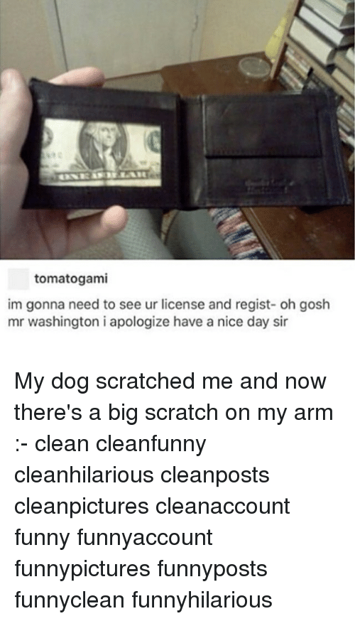 Funny, Memes, and Scratch: tomatogami  im gonna need to see ur license and regist- oh gosh  mr washington i apologize have a nice day sir My dog scratched me and now there's a big scratch on my arm :- clean cleanfunny cleanhilarious cleanposts cleanpictures cleanaccount funny funnyaccount funnypictures funnyposts funnyclean funnyhilarious