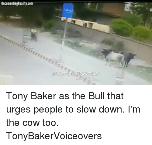 cowed: Tony Baker as the Bull that urges people to slow down. I'm the cow too. TonyBakerVoiceovers