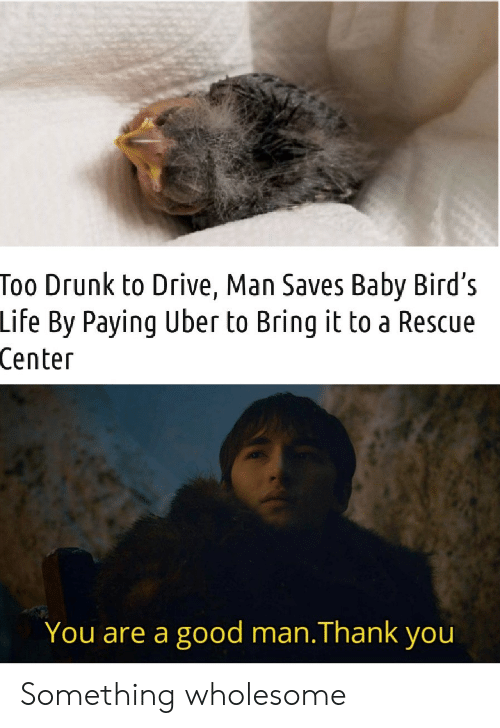 Drunk, Life, and Uber: Too Drunk to Drive, Man Saves Baby Bird's  Life By Paying Uber to Bring it to a Rescue  Center  You are a good man.Thank you Something wholesome