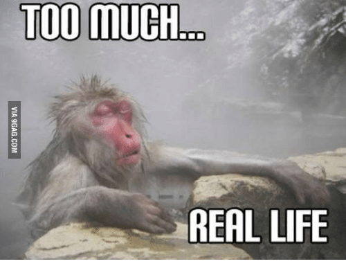 Too Much Co Real Life Is This Real Life Monkey Meme On Esmemes Com