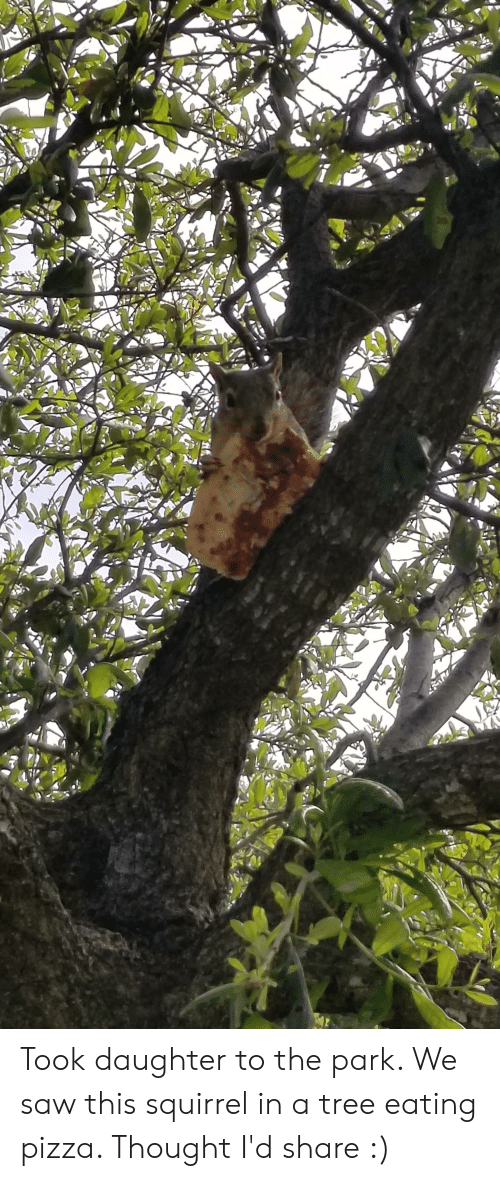 Pizza, Saw, and Squirrel: Took daughter to the park. We saw this squirrel in a tree eating pizza. Thought I'd share :)