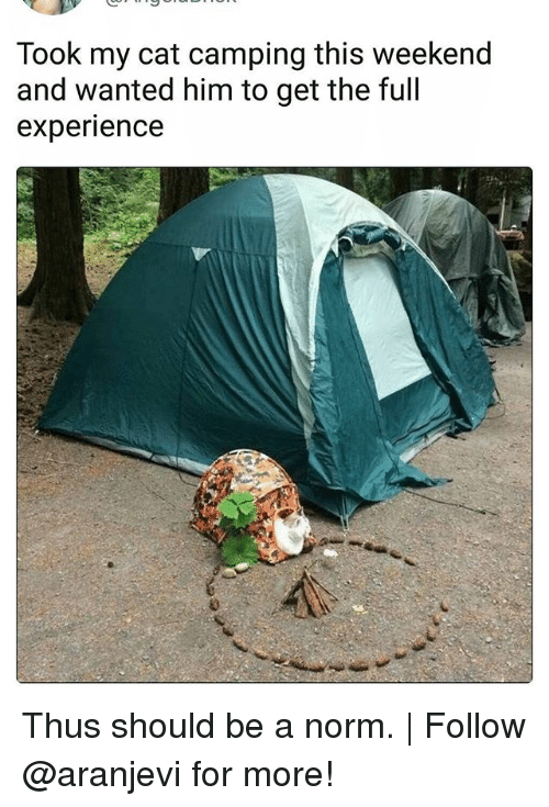 weekenders: Took my cat camping this weekend  and wanted him to get the full  experience Thus should be a norm. | Follow @aranjevi for more!