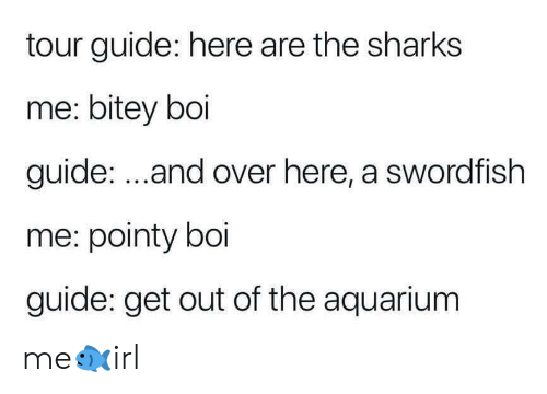 Aquarium, Sharks, and Boi: tour guide: here are the sharks  me: bitey boi  guide: ...and over here, a swordfish  me: pointy boi  guide: get out of the aquarium me🐟irl