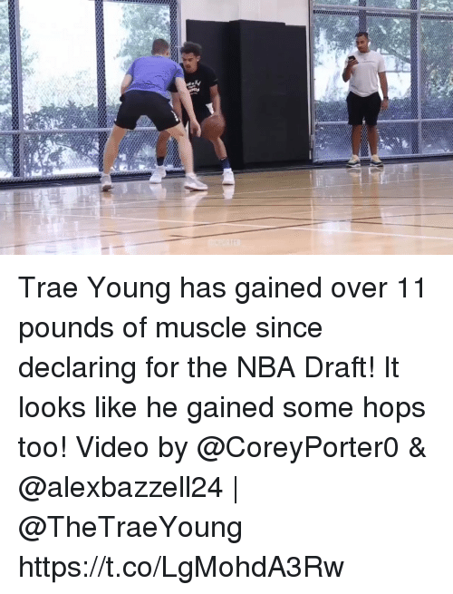Memes, Nba, and Nba Draft: Trae Young has gained over 11 pounds of muscle since declaring for the NBA Draft! It looks like he gained some hops too!  Video by @CoreyPorter0 & @alexbazzell24 | @TheTraeYoung https://t.co/LgMohdA3Rw
