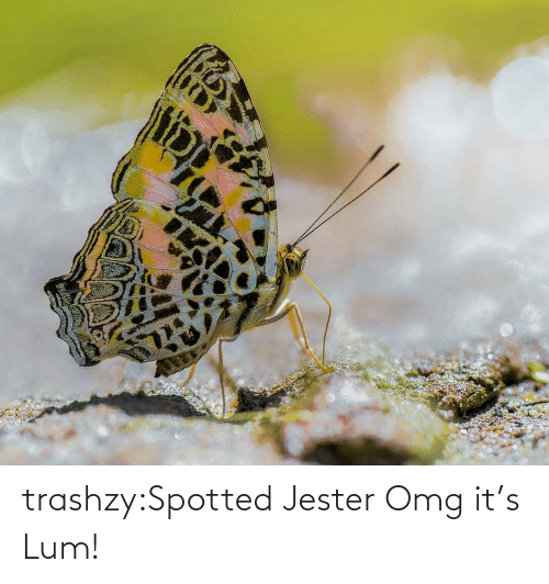Spotted: trashzy:Spotted Jester   Omg it's Lum!