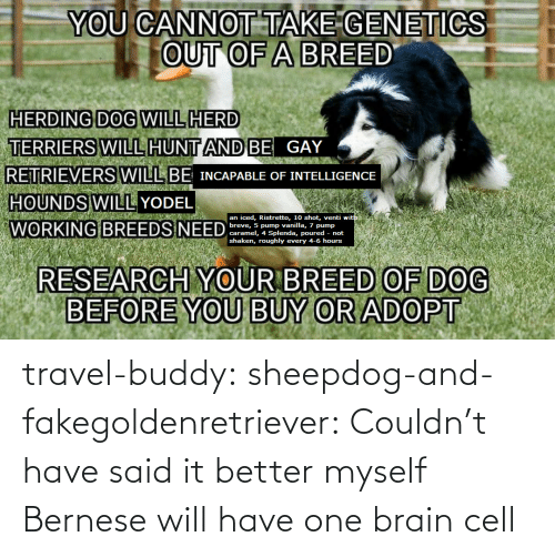 Couldnt: travel-buddy:  sheepdog-and-fakegoldenretriever:  Couldn't have said it better myself   Bernese will have one brain cell
