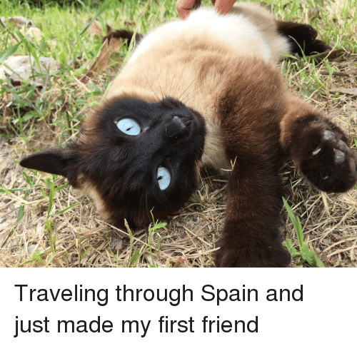 Spain, Friend, and First: Traveling through Spain and just made my first friend