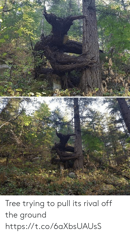 Tree, Faces-In-Things, and Off: Tree trying to pull its rival off the ground https://t.co/6aXbsUAUsS