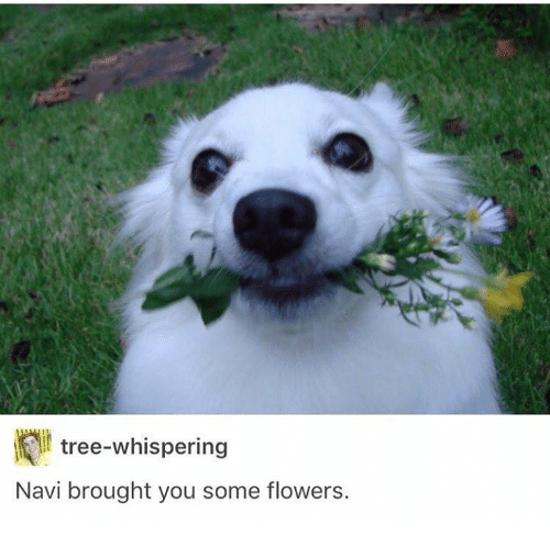 navi: tree-whispering  Navi brought you some flowers.