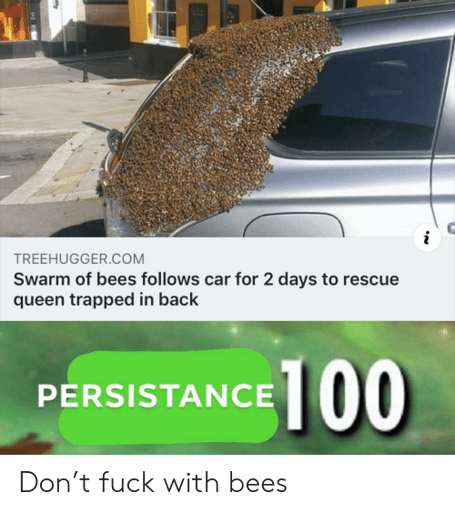 Days To: TREEHUGGER.COM  Swarm of bees follows car for 2 days to rescue  queen trapped in back  PERSISTANCE 100 Don't fuck with bees