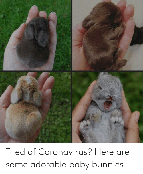 tried: Tried of Coronavirus? Here are some adorable baby bunnies.