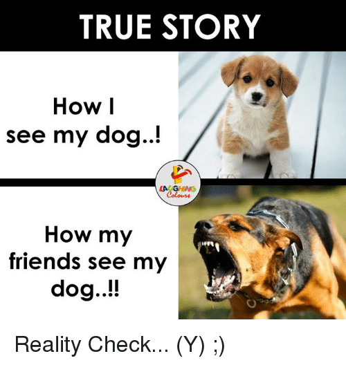 Dog Laughing: TRUE STORY  How I  see my dog..!  LAUGHING  How my  friends see my  dog..!! Reality Check... (Y) ;)